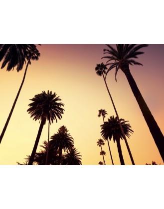 ΦΩΤΟΤΑΠΕΤΣΑΡΙΑ CALIFORNIA - EXTRA LARGE